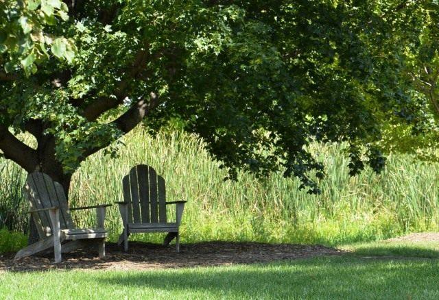 Зона отдыха в тени большого дерева