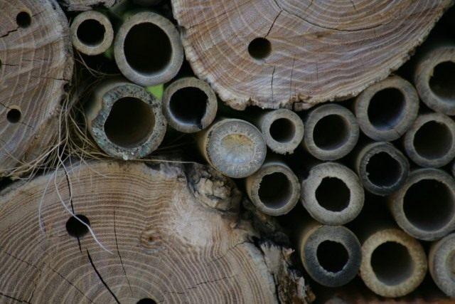 Полые ветки и высверленные в бревне дырки для полезных насекомых