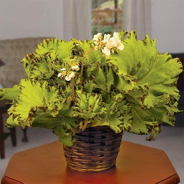 Begonia-Baby-Dress-1