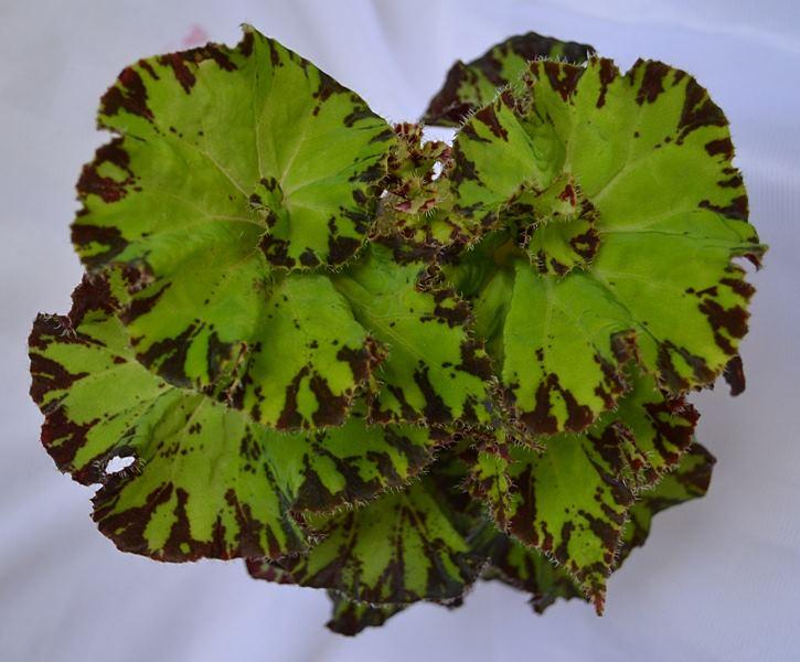Begonia-Baby-Dress-2
