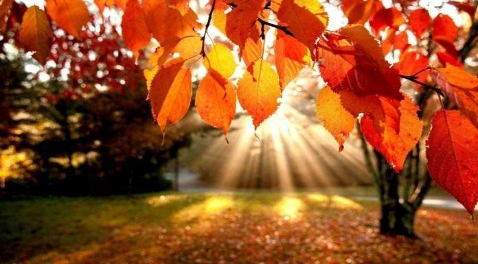 Октябрь. Осенние листья
