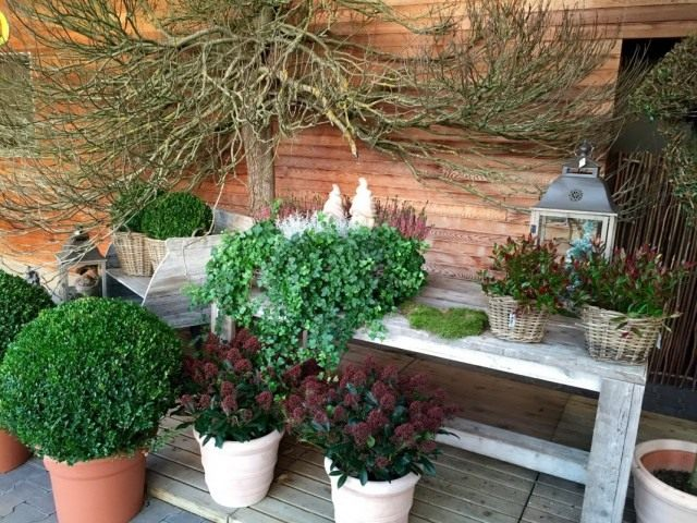 Подготовка горшечных и кадочных садовых растений к зимовке