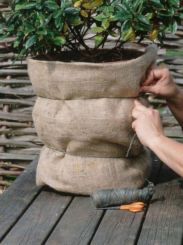 Укутывание горшечных растений мешковиной
