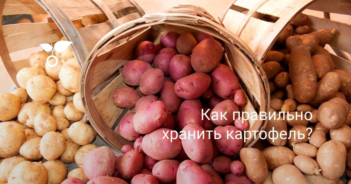 Сколько градусов выдерживает картофель при хранении