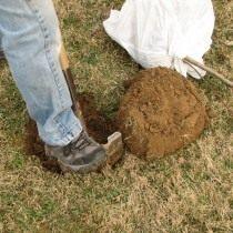 Выкопка ямы под саженец груши