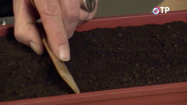 Выравниваем и измельчаем почву
