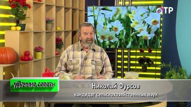 Николай Фурсов. Кандидат сельскохозяйственных наук