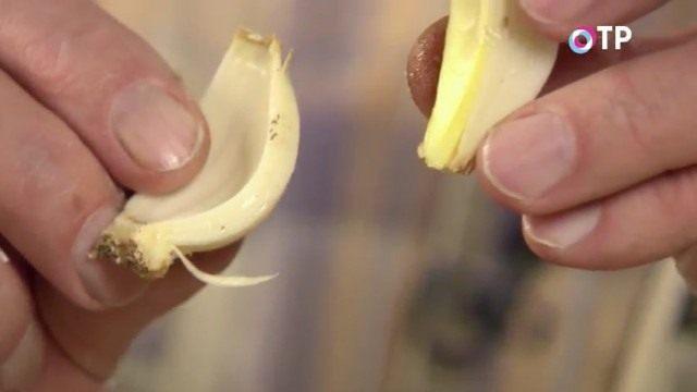 Разделяем часть луковицы ещё на 2 части. Получится 2 сектора