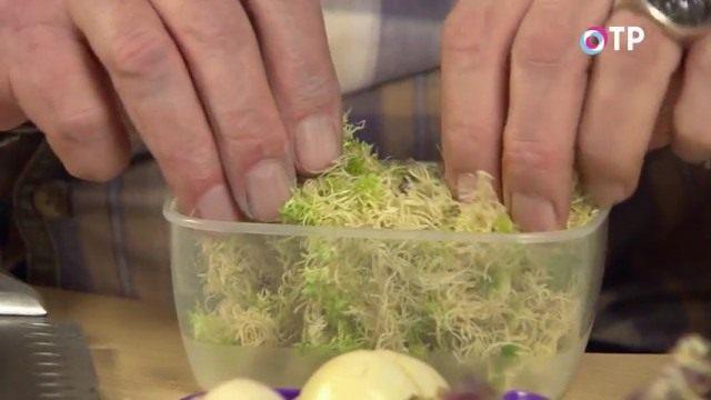Накладываем сфагновый мох в лоточек