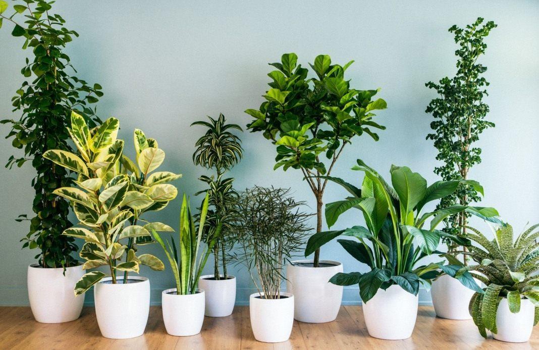 10 самых популярных комнатных растений. Названия распространённых растений  с фото — Ботаничка.ru