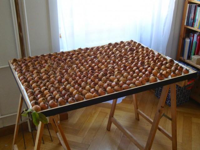 Собранные на хранение плоды мушмулы германской