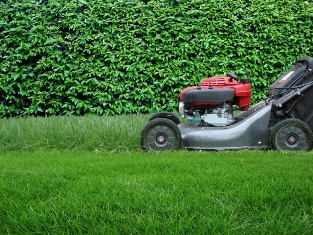 Чтобы газон выглядел красиво, его требуется регулярно скашивать
