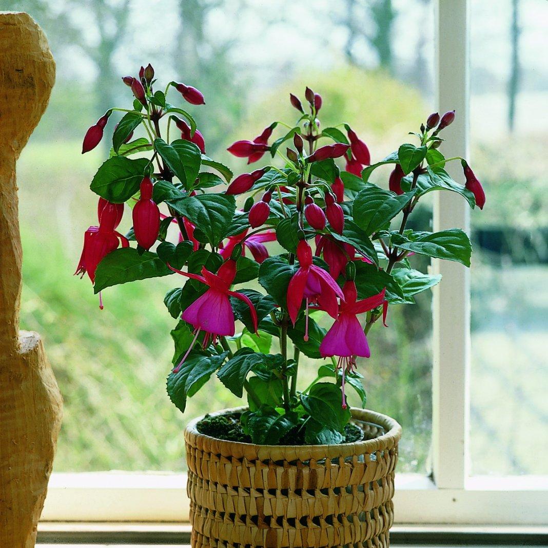 задаваемый комнатные цветы которые красиво цветут картинки учиться надо доме