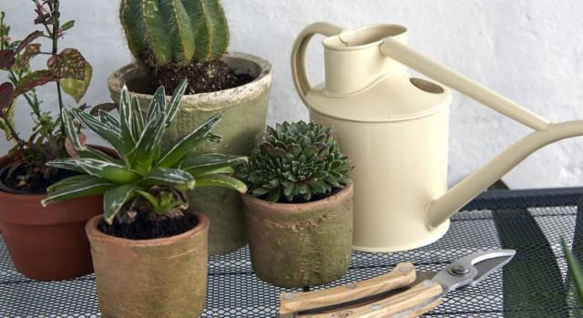 Адаптация купленных комнатных растений