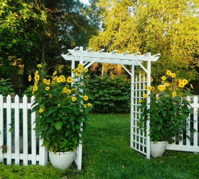 Использование подсолнечника в вазоне для оформления сада