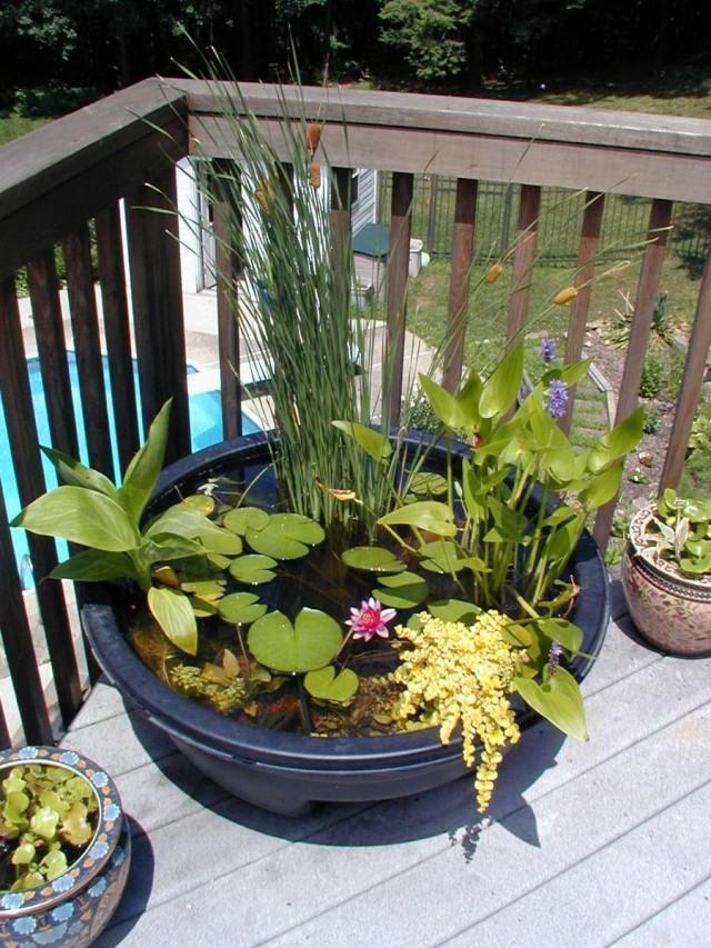 Мини-пруд с водными растениями в вазоне