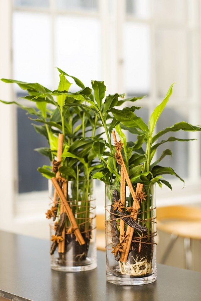 Кардамон настоящий, или элеттария кардамомум (Elettaria cardamomum)