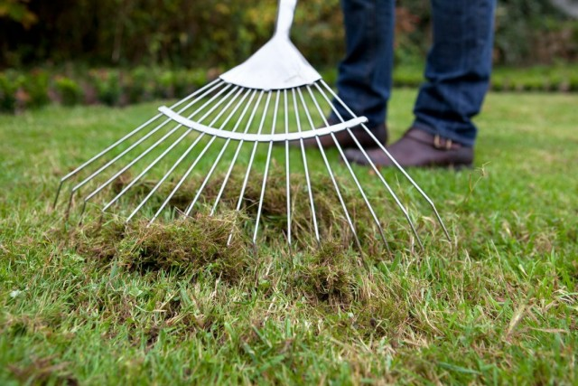 Скарификация — вычесывание старой травы из газона