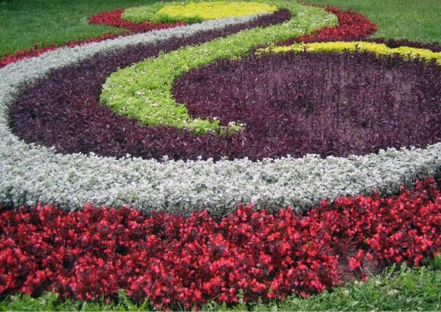 Большая цветочная клумба из однолетников