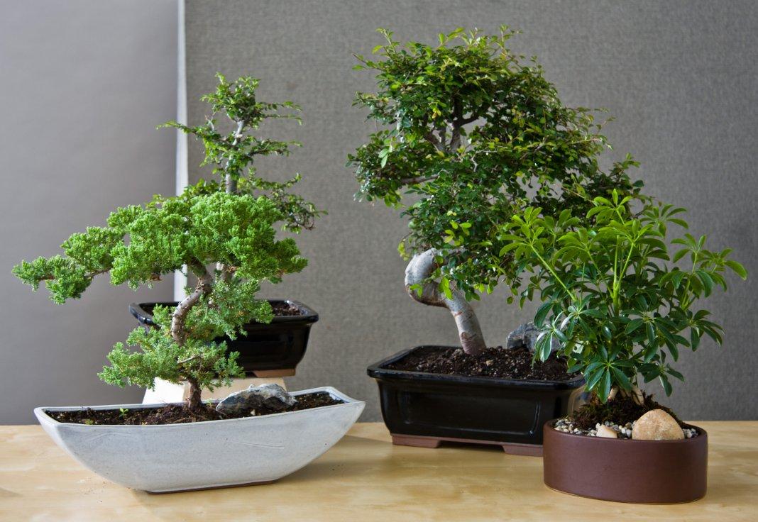 Картинки с деревянными статуэтками растение