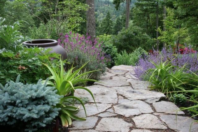 Сад из фитонцидных растений