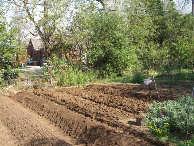 Рядковый способ обустройства огорода