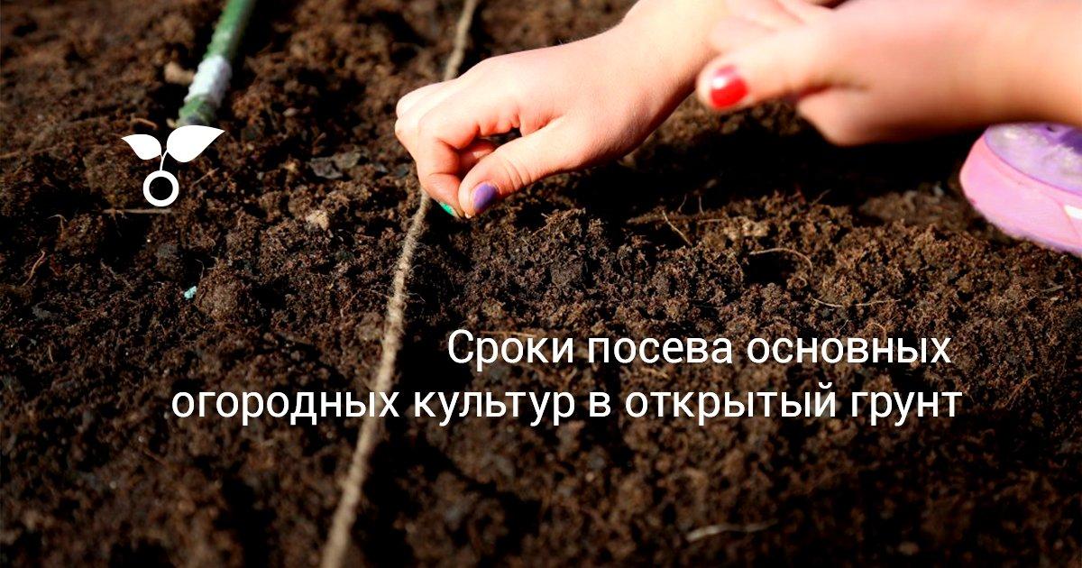 Когда можно сеять семена в открытый грунт