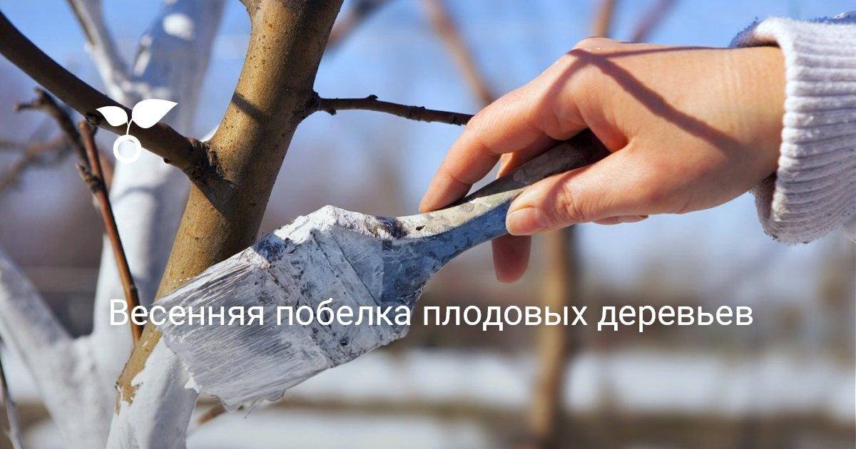 Как и когда белить деревья в саду
