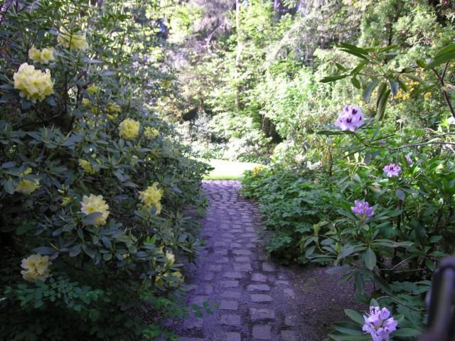Цветники из рододендронов вдоль садовой дорожки