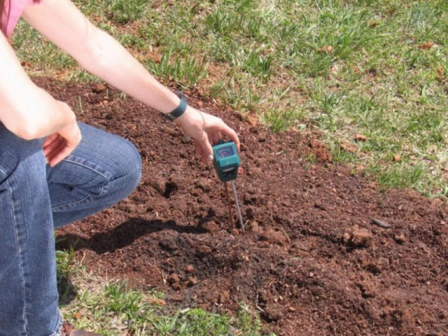 Определение кислотности почвы специальным прибором