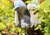 Внесение минеральных удобрений. © michaeljung