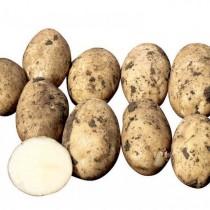 Сорт картофеля для Центрально-Черноземного региона - Арроу