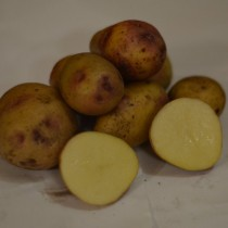 Сорт картофеля для Центрального региона - Биоголд