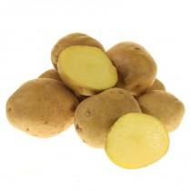 Сорт картофеля для Нижневолжского региона - Луговской