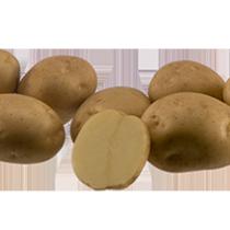 Сорт картофеля для Нижневолжского региона - Марфона