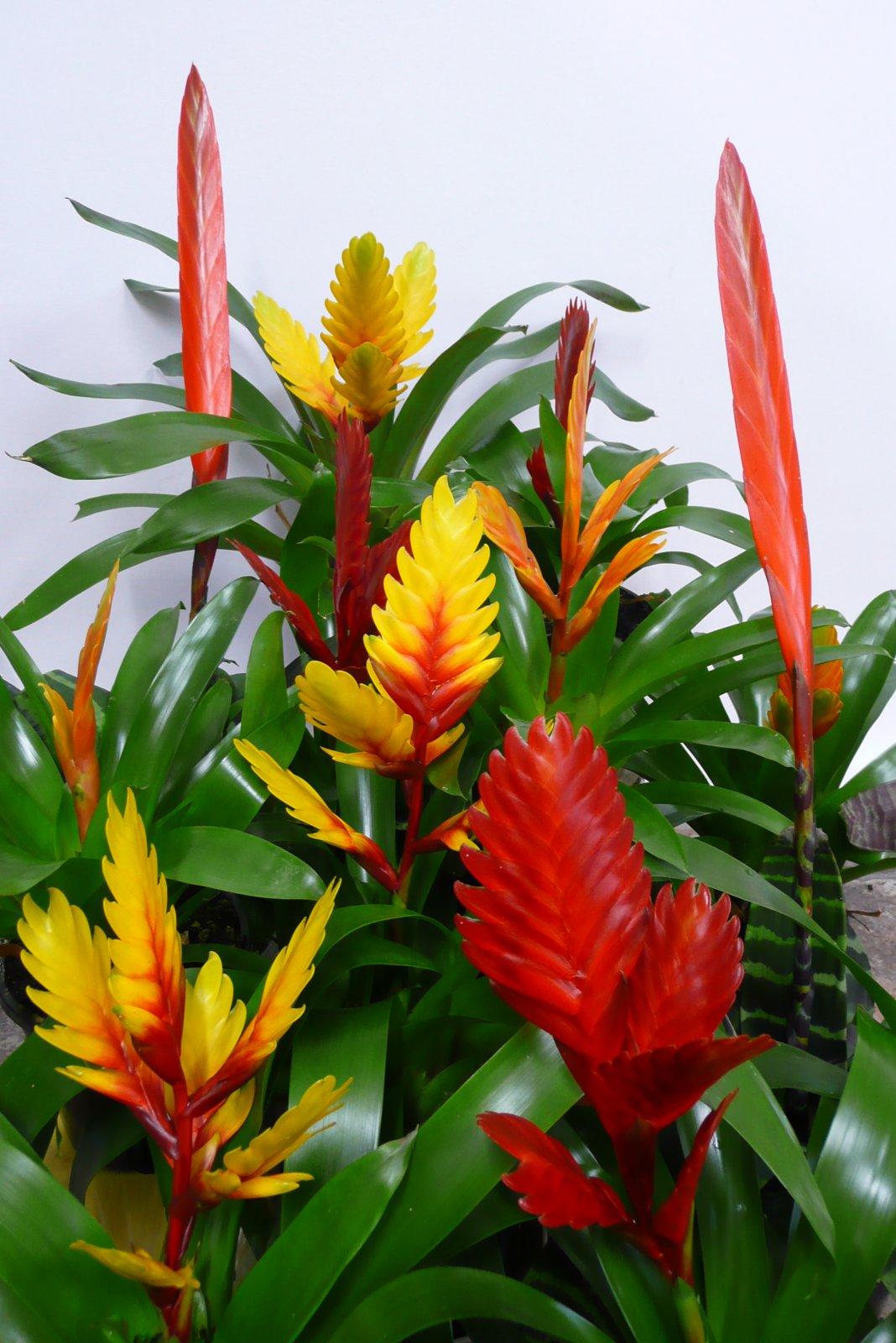 Тропический комнатные цветы фото названия и уход