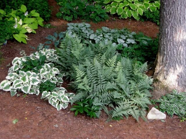 Цветник с декоративными растениями с белыми листьями
