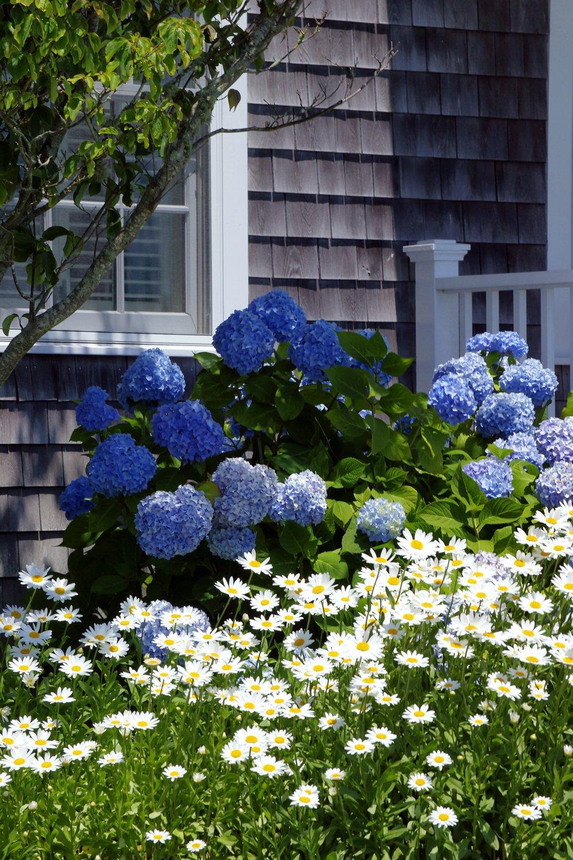 организациях ип, цветы для загородного дома названия и фото хотите участвовать