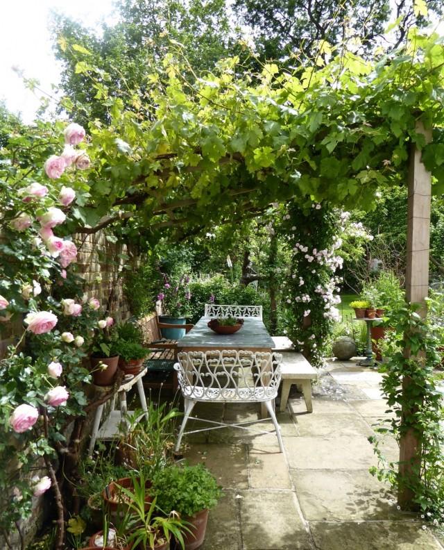 Беседка, увитая виноградом и розами