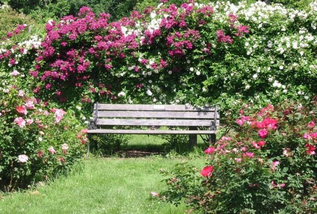 Скамейка, вокруг которой высажены розы