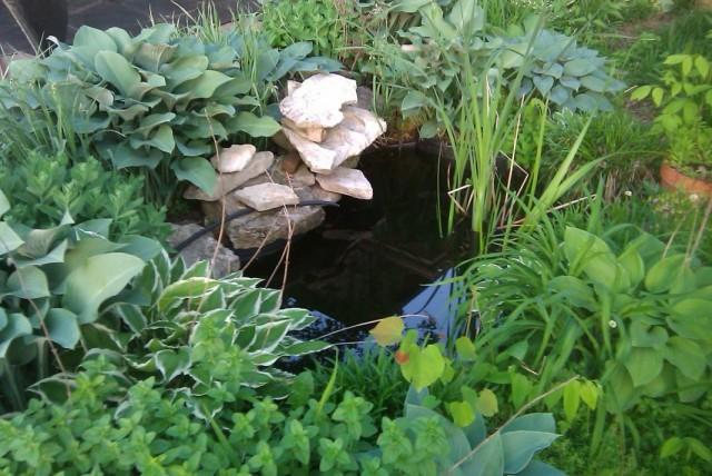 Загущенные посадки декоративных растений возле пруда