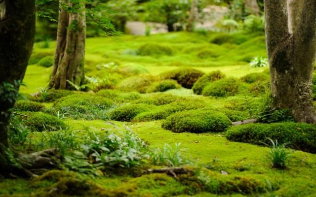 Мхи – отличная альтернатива газонам