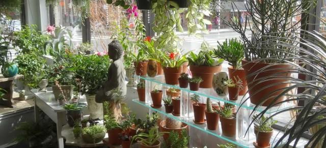 Цветочный магазин комнатных растений