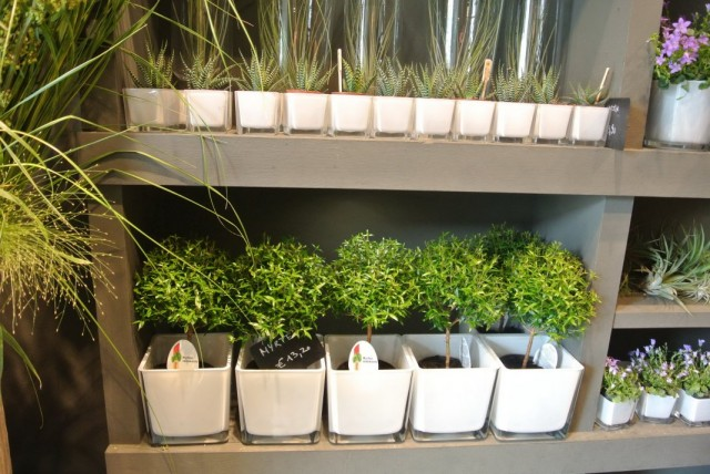 Полки с комнатными растениями во флористическом магазине