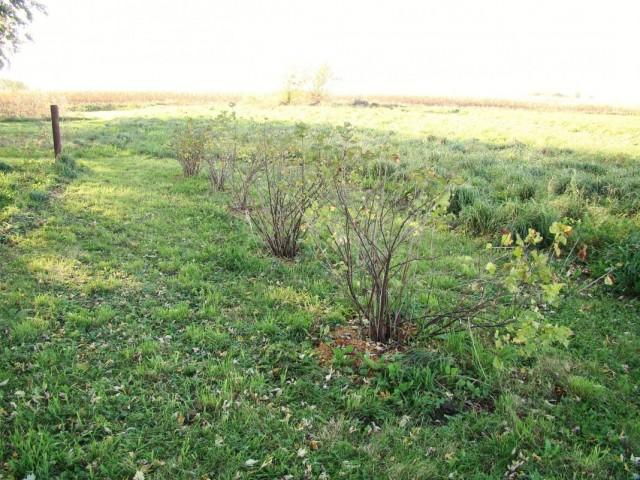 Осенняя подкормка ягодных кустарников