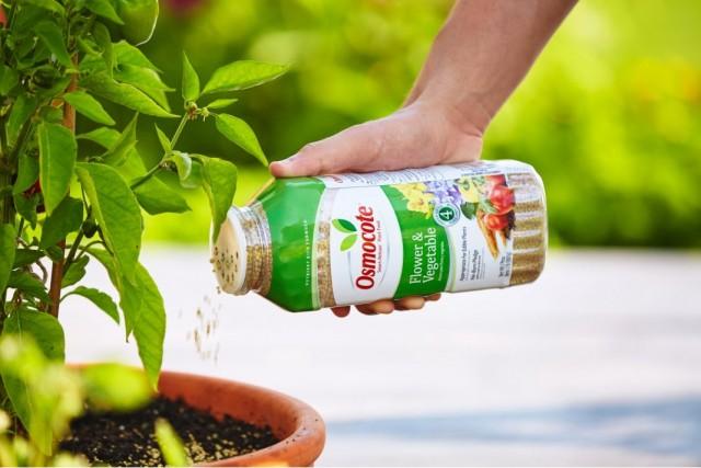 Подкормка комнатных растений гранулированным удобрением