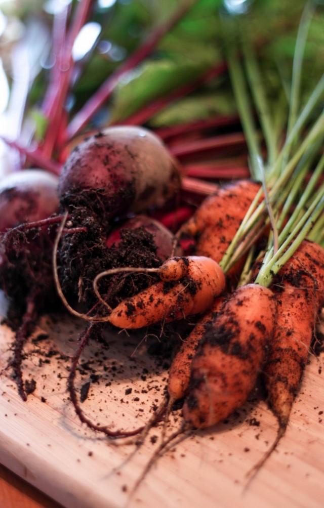 Выкопанные морковь и свёкла