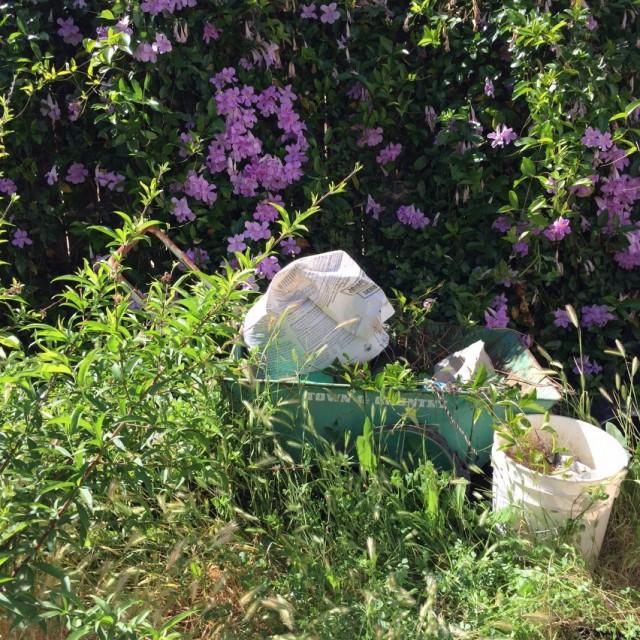 Очистка запущенных территорий сада