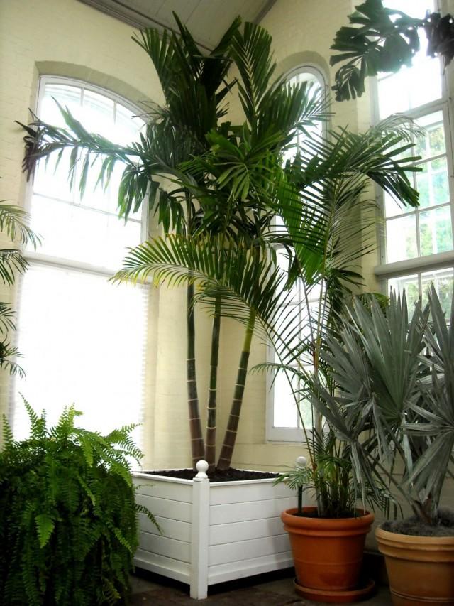 Пальмы в интерьере