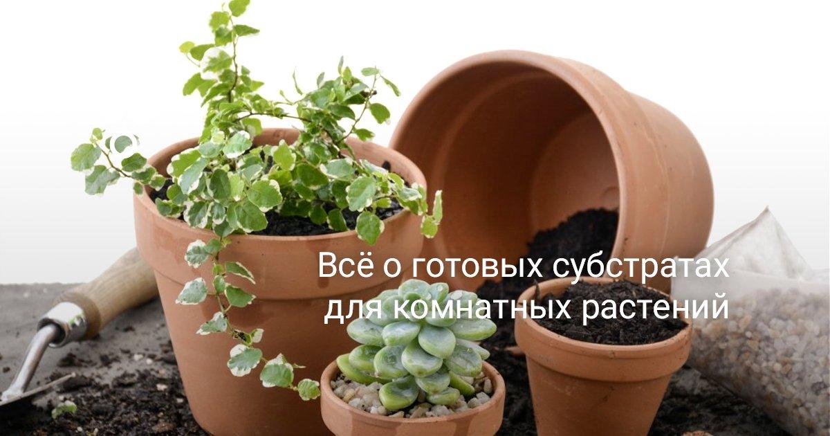 Грунт для луковичных комнатных растений